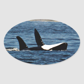 I heart Orcas Killer Whale Belly flop Oval Sticker