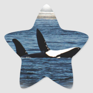 I heart Orcas Killer Whale Belly flop Star Stickers