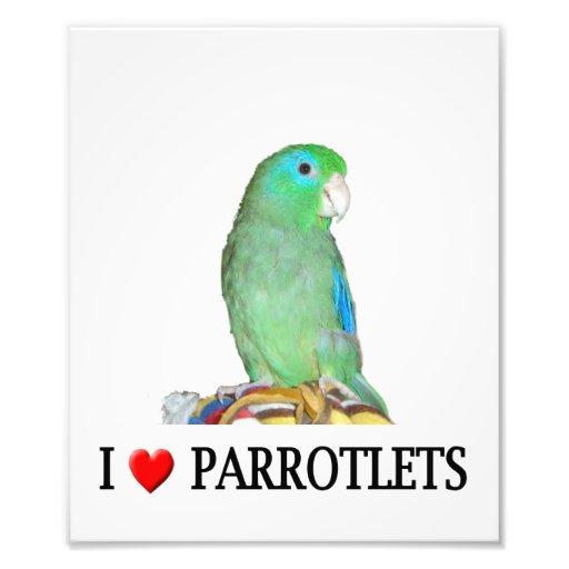 "I ""Heart"" Parrotlets Photo Print"