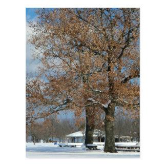 I HEART trees Postcard