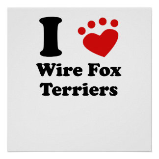 I Heart Wire Fox Terriers Poster