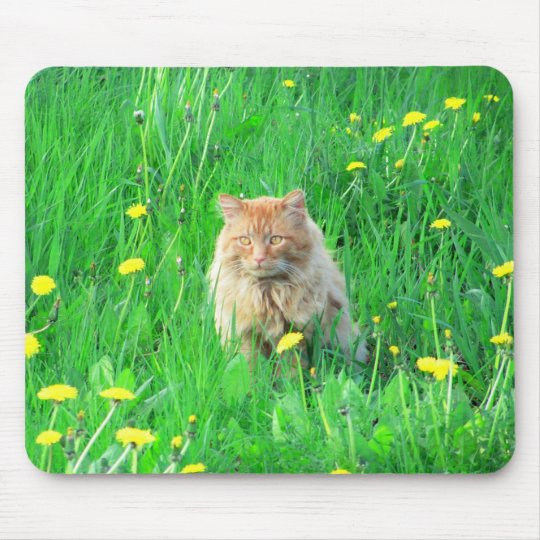 I is a dandy lion mouse pad