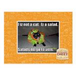 I iz not a cat. Iz a salad. Post Card