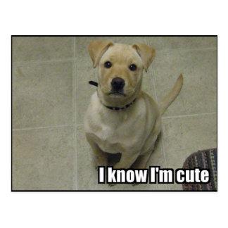 I know I'm cute Postcard