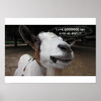 """I Look Goooood This Close-up!"",Goat"