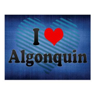 I Love Algonquin, United States Postcard