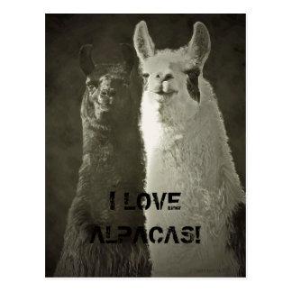 I Love Alpacas! Postcard