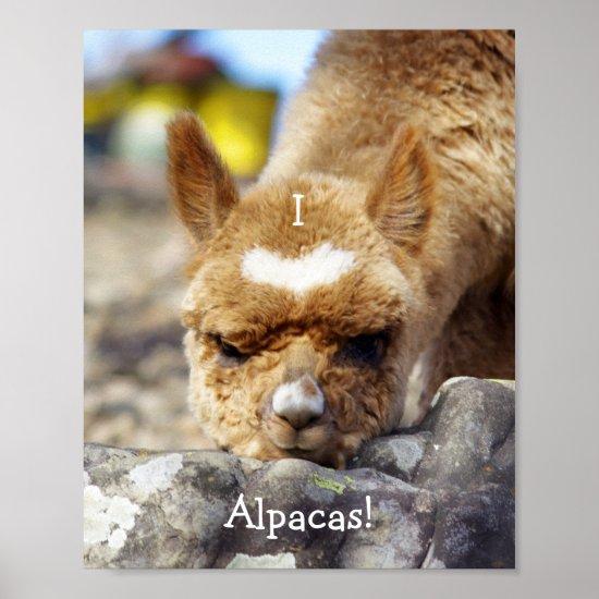 I Love Alpacas Poster