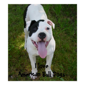 I Love American Bull Dogs Poster