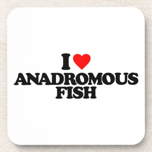 I LOVE ANADROMOUS FISH BEVERAGE COASTER
