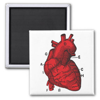 I Love Anatomy Magnet