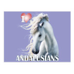 I Love Andalusians Post Card