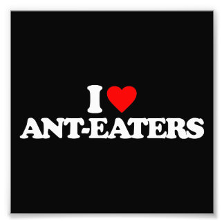 I LOVE ANT-EATERS PHOTO