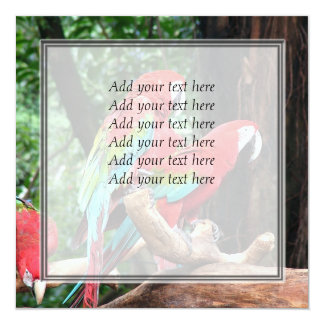 I love beatiful birds!  red and blue parrots 5.25x5.25 square paper invitation card