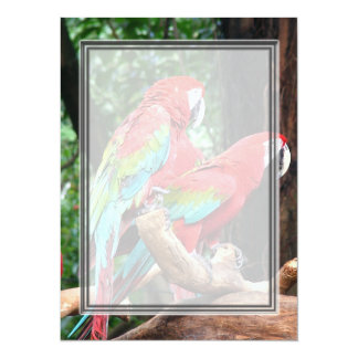 I love beatiful birds!  red and blue parrots 5.5x7.5 paper invitation card
