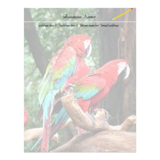 I love beatiful birds!  red and blue parrots letterhead