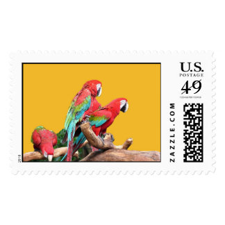 I love beautiful birds! red and blue parrots. stamp