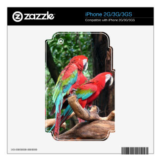 I love beautiful birds! skins for iPhone 3