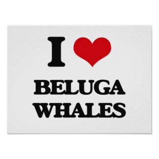 I love Beluga Whales Print
