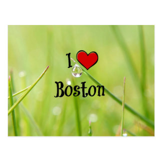 I Love Boston - Dewdrop on Blade of Grass Postcard