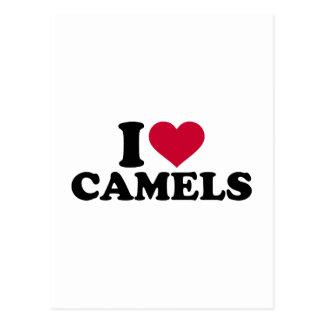 I love camels postcard