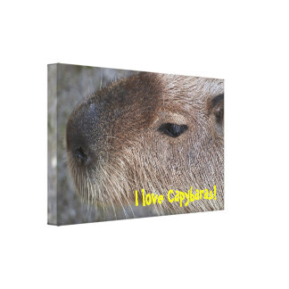 I love Capybaras! Stretched Canvas Print