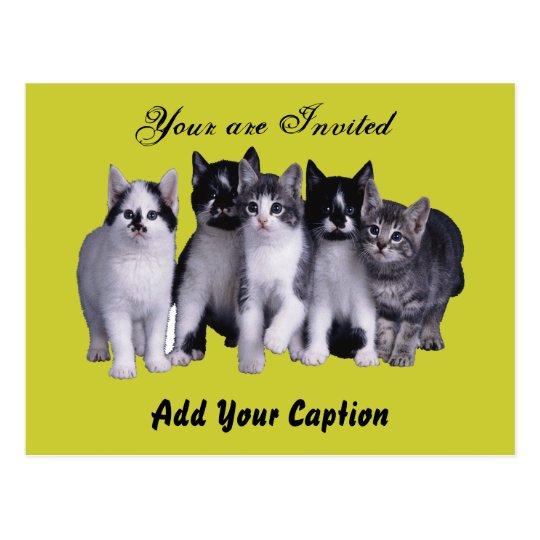 I love Cats from Junglewalk.com Postcard