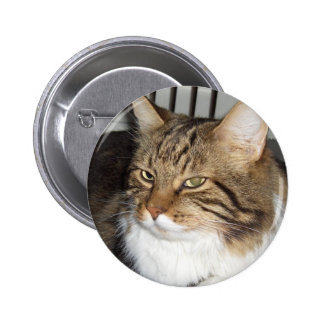 I love cats pin redondo de 2 pulgadas