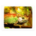 i love chameleons Digital art Postcards