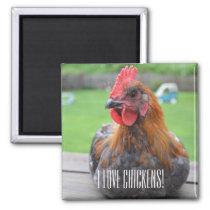 I Love Chickens... Black Copper Maran Roo Magnet