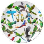 I Love Colorful Parrots Porcelain Plate