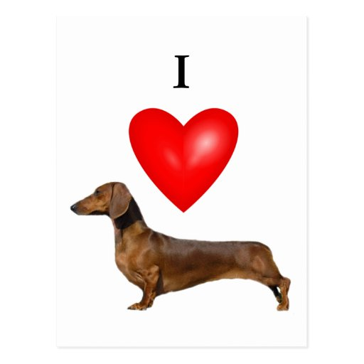I Love Dachshunds I Love Dachshunds Post...