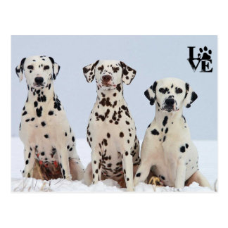 I Love Dalmatian Postcard