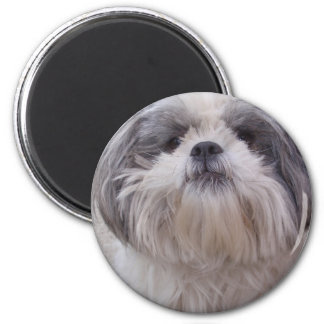 I love dogs! 2 inch round magnet
