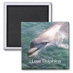 I love Dolphins Magnet Fridge Magnets