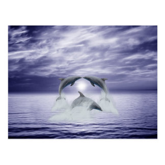 I love dolphins postcard