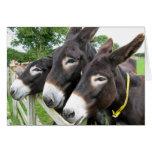 I Love Donkeys! Greeting Card