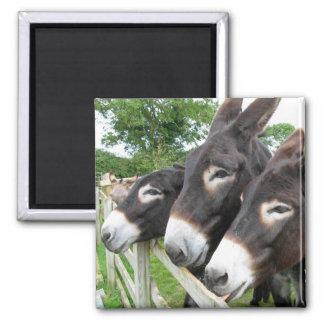 I Love Donkeys! 2 Inch Square Magnet