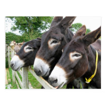 I Love Donkeys! Postcard