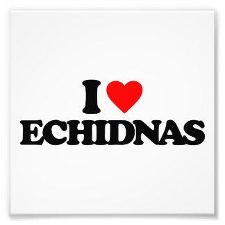 I LOVE ECHIDNAS PHOTO PRINT