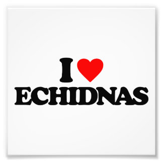 I LOVE ECHIDNAS ART PHOTO