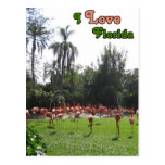 I Love Florida Flamingos Postcard