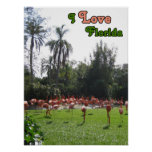 I Love Florida Flamingos Poster