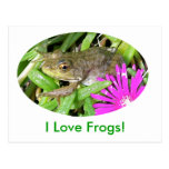 I Love Frogs! Cards, Shirts & Gift Items Postcard