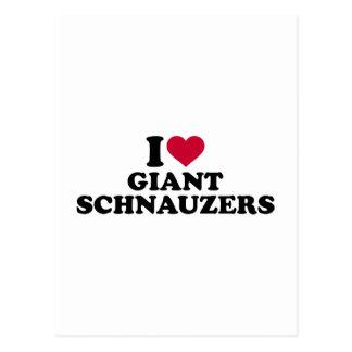 I love Giant Schnauzers Postcard