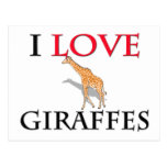 I Love Giraffes Postcard
