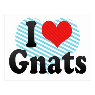 I Love Gnats Postcard