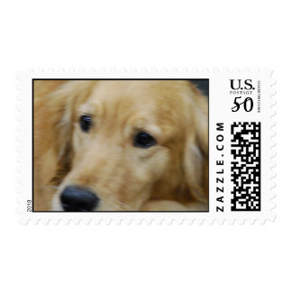 I Love Goldens Stamp