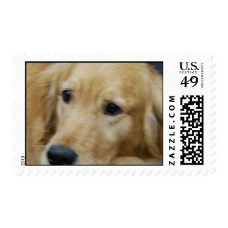 I Love Goldens Stamp