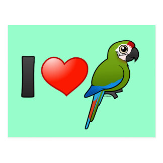 I Love Great Green Macaws Postcard